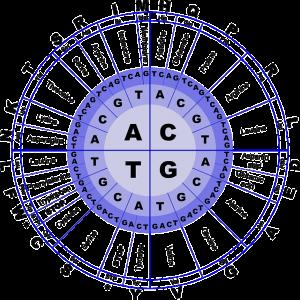 DNA Modell