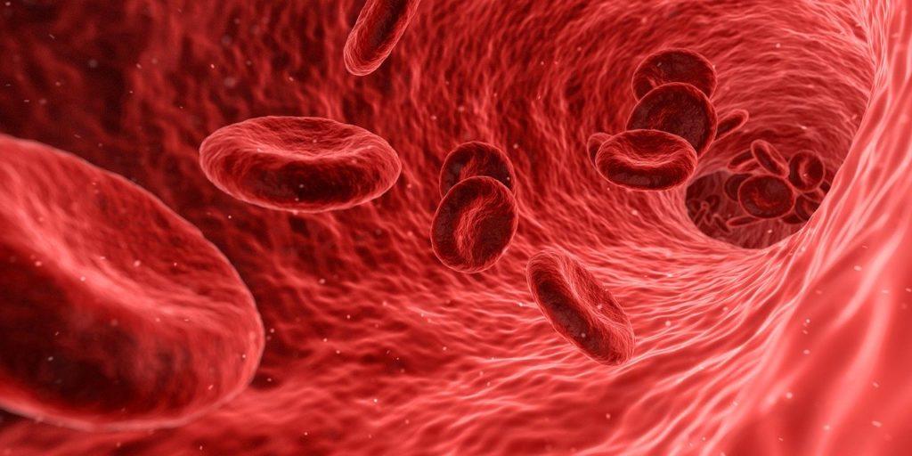 Wie funktioniert die Immunabwehr