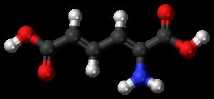 Alles Wissenswerte über den Aminosäuren-Aufbau