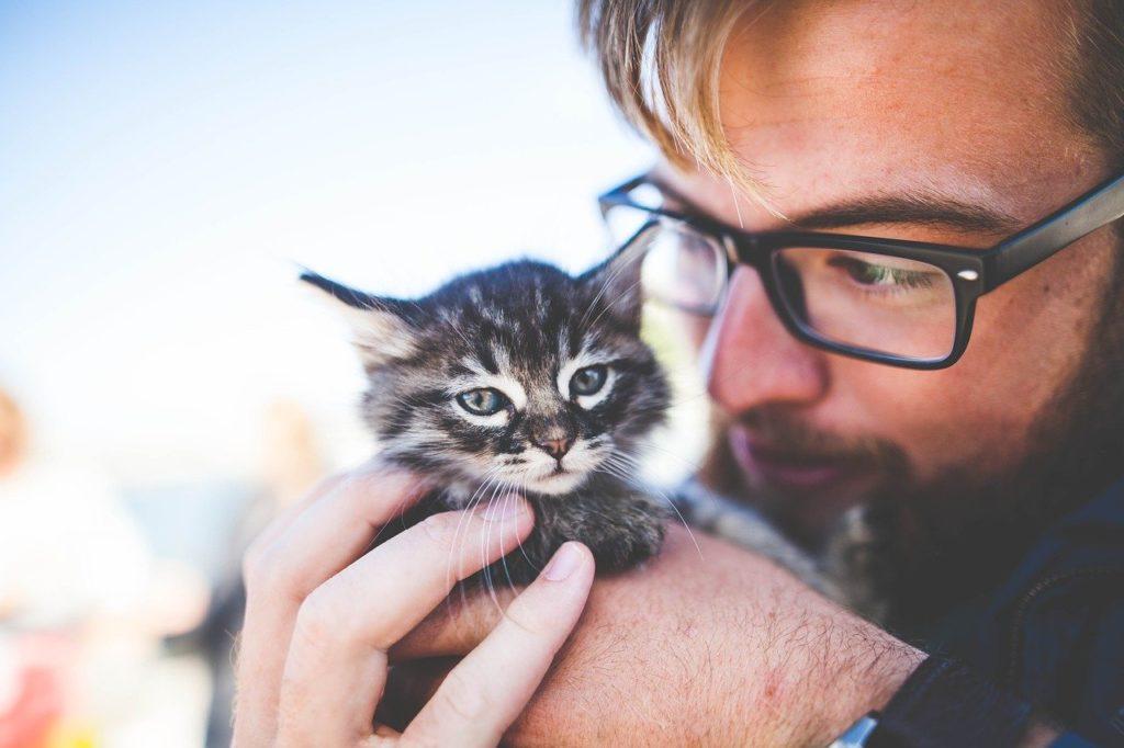 Kann Taurin bei Katzen überdosiert werden?