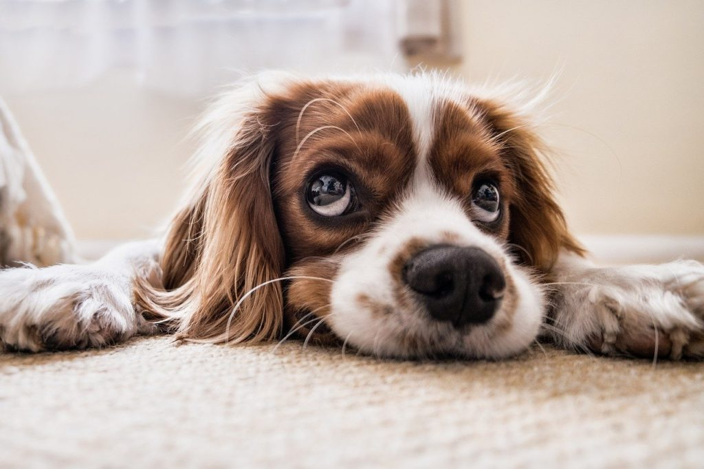 Taurin für deinen Hund
